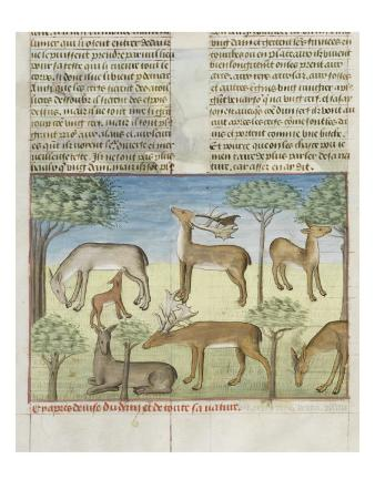 The Book of Gaston Phoebus Hunting: Deer and Nature