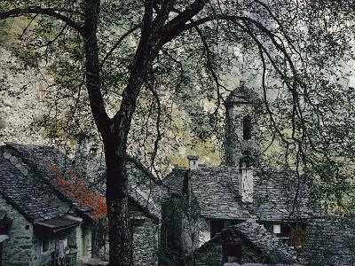 Spreading Chestnut Tree Appears to Drape over Hand-Hewn Granite Roofs