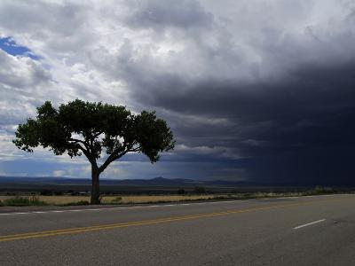 A Lone Tree on Highway 68 to Taos and Storm Clouds