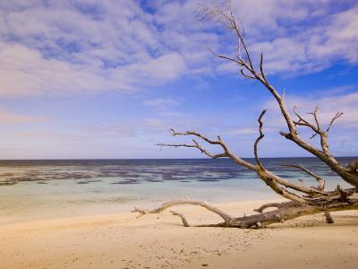 Driftwood on a Desroches Island Beach