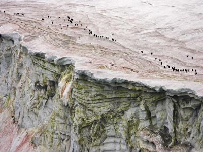 Chinstrap Penguins Crossing an Algae-Stained Glacier on Thule Island