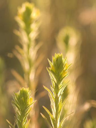 Close Up of Prairie Plants Shot in Late Afternoon in the Grasslands