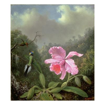 Still Life with an Orchid and a Pair of Hummingbirds, C.1890S