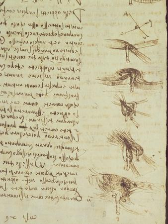 Scientific Diagrams, from the 'Codex Leicester', 1508-12