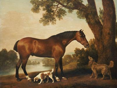 A Bay Hunter, a Springer Spaniel and a Sussex Spaniel, 1782