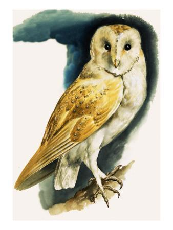 Barn Owl, Illustration from 'Peeps at Nature', 1963 Giclee ...