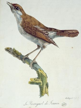 The Nightingale of France, C.1830
