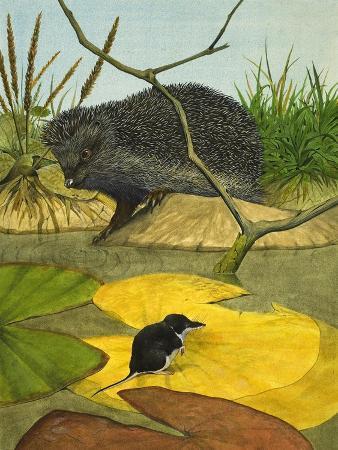 Water Shrew and Hedgehog, 1974
