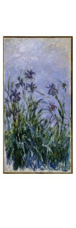 Purple Irises, 1914-17