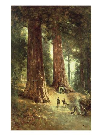 In the Redwoods, 1899