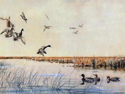 Ducks Landing, 1919
