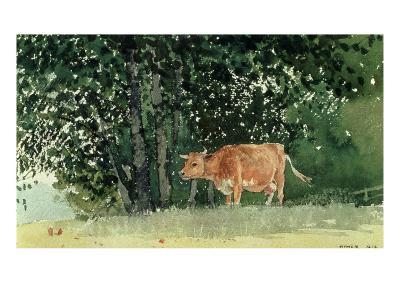 Cow in Pasture, 1878