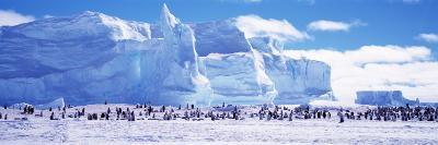 Emperor Penguin Colony, Ruser-Larsen Ice Shelf, Weddell Sea, Antarctica