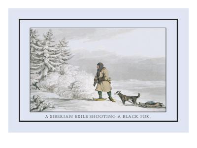 Siberian Exile Prepares to Shoot a Black Fox