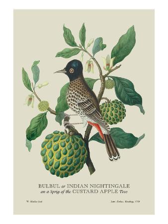 Indian Nightingale