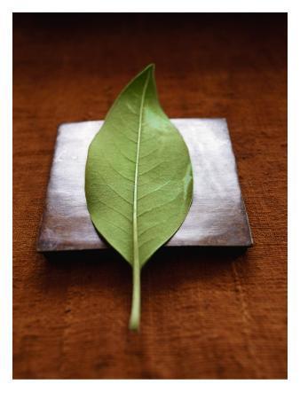 Green Leaf on Metallic Square
