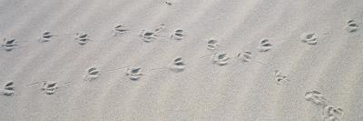 Bird Footprints on the Sand, Australia