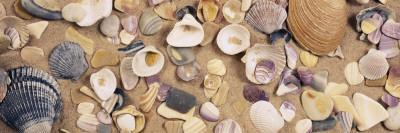 View of Seashells