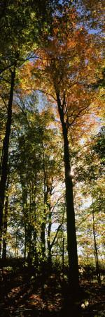 View of Trees in a Forest at Carpenter Falls, Finger Lakes, New York State, USA