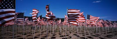 American Flags Laid Out in a Field, Questa, Taos County, New Mexico, USA