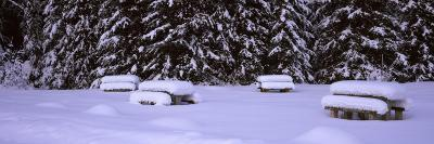 Snow Covered Picnic Tables on a Landscape, Banff National Park, Alberta, Canada