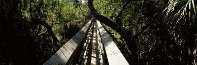 Canopy Walkway in a Forest, Myakka River State Park, Sarasota, Sarasota County, Florida, USA