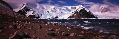 Penguins on the Coast, Neko Harbor, Andvord Bay, Antarctic Peninsula, Antarctica