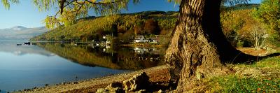 Tree at the Lakeside, Loch Tay, Highlands Region, Scotland