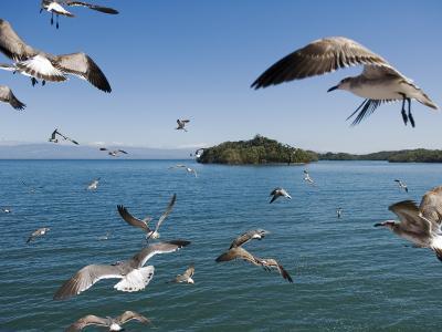 Birds Flying Along Ferry Ride Between Peninsula De Nicoya and Puntarenas.