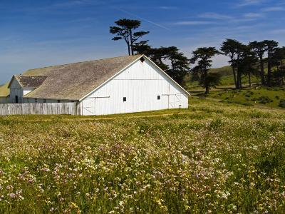 Historic Farm House Surrounded by Wildflowers at End of Pierce Point Road