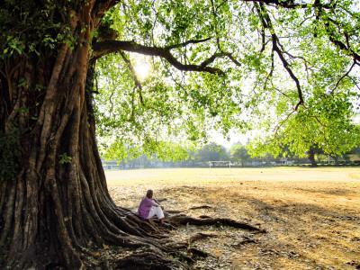 Man Sitting under a Banyan Tree