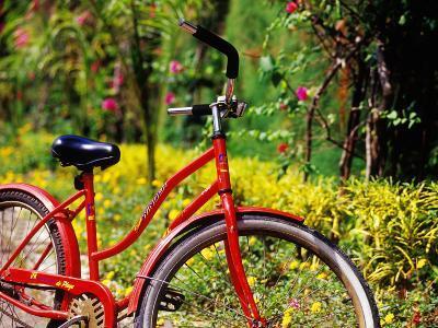 Red Bicycle, Half Moon Resort