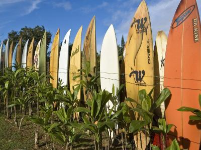 Colourful Surfboard Fence