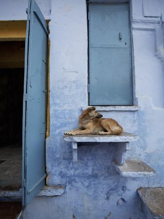 Dog Resting on Step Leading to Doorway