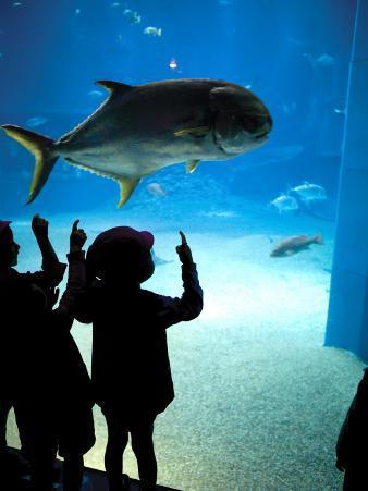 Excited School Children Gazing at Fish at Osaka Aquarium