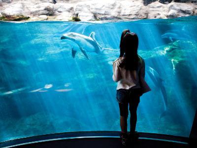 Young Child Gazing at Fish at Osaka Aquarium