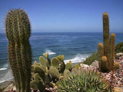 Cacti in Gardens of Fellowship of Self Realization with Pacific Ocean Beyond