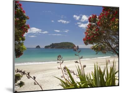 Pohutukawa Tree In Bloom And Hahei Coromandel Peninsula North Island New Zealand Photographic Print David Wall Allposters Com