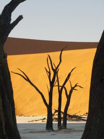 Dead Trees Silhouetted Against Sand Dune at Dead Vlei, Sossusvlei, Namibia, Africa