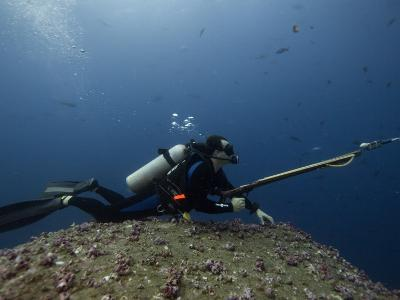 Diving With Spear Gun, Wolf Island, Galapagos Islands, Ecuador