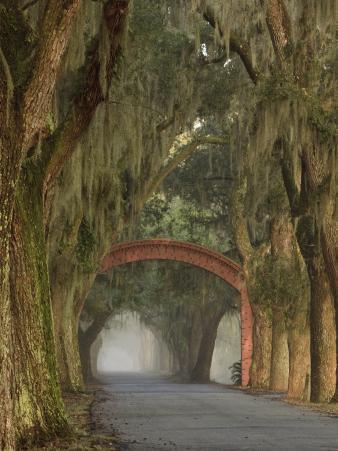 Entrance To Bethesda in Early Morning Light, Savannah, Georgia, USA