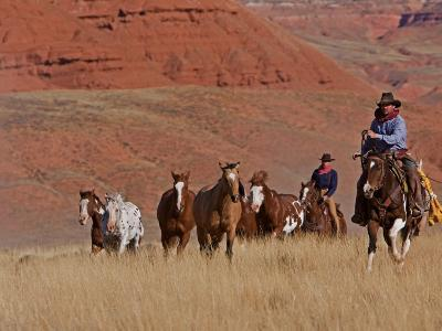 Cowboys Herding Horses in the Big Horn Mountains, Shell, Wyoming, USA