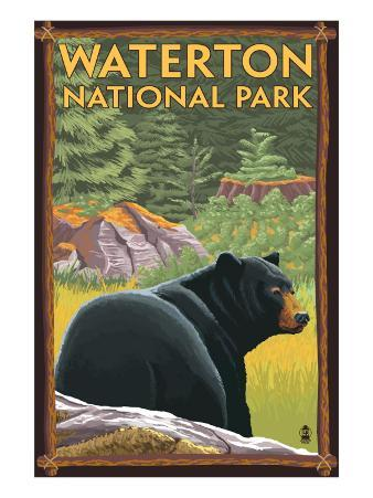 Waterton National Park, Canada - Bear in Forest