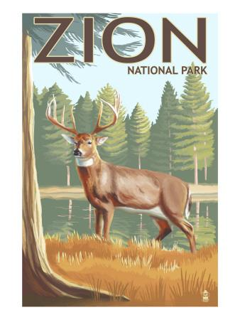 Zion National Park, UT - Deer
