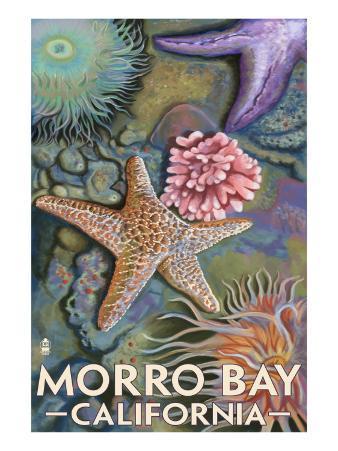 Morro Bay, CA - Tidepool