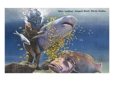 Marineland, Florida - Diver Moving Drugged Shark at Marine Studios