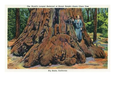 Big Basin, California - Woman Stands by Santa Clara Tree