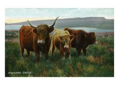 Scotland - View of Highland Cattle