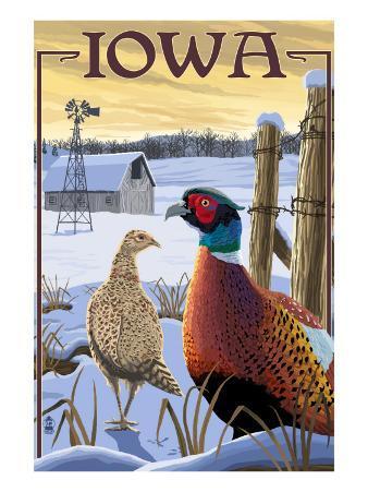 Pheasants - Iowa