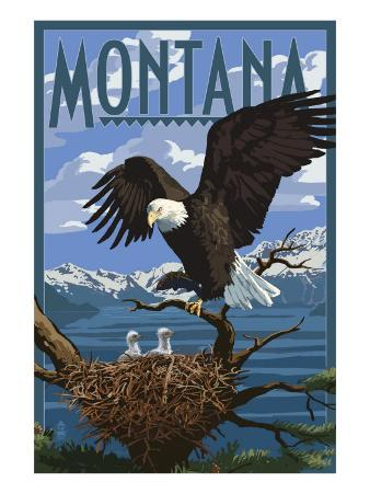 Montana - Eagle Perched with Chicks